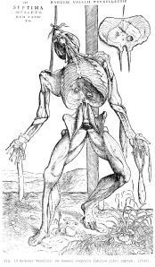 Fig. 10 Andreas Vesalius. De humani corporis fabrica libri septem . (1543).
