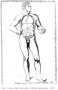 Fig. 11 Bartolomeo Eustachio. Tabulae anatomicae . (1783).