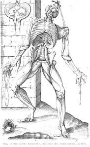 Fig. 12 Bartolomeo Eustachio. Anatomia del corpo humano. (1560).