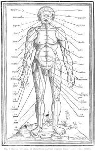 Fig. 8 Charles Estienne. De dissectione partium corporis humani libri tres.  (1545).